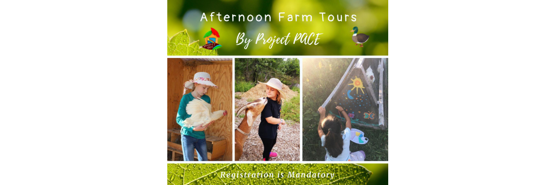 Summer Farm Tours | 17:00-19:00