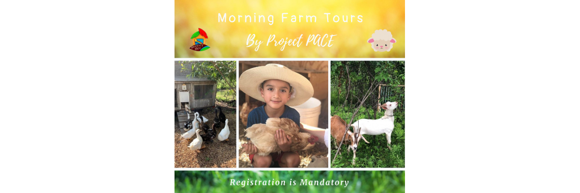 Summer Farm Tours | 9:30-10:30 AM