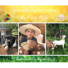 Summer Farm Tours | morning